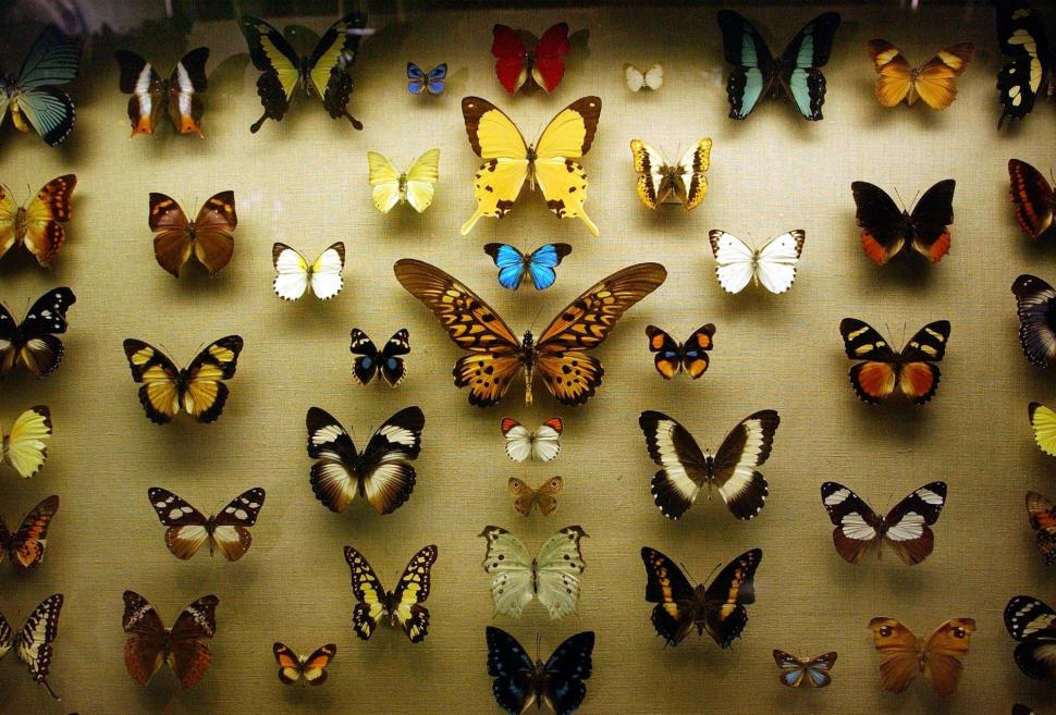 стена из бабочек