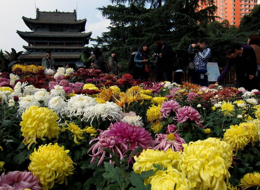 хризантемы в Китае