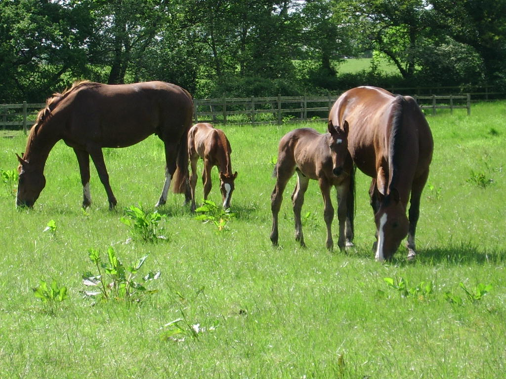 Лошади и жеребята