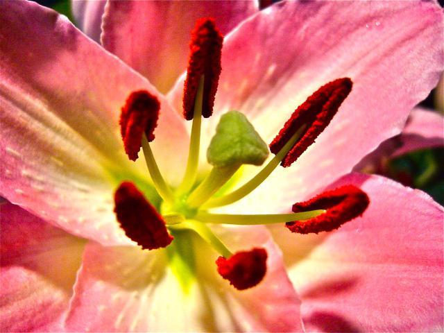 Цветок с пестиками