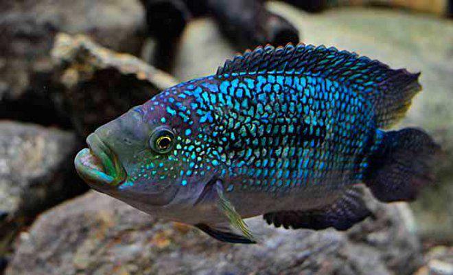 Как кормить рыбок в аквариуме