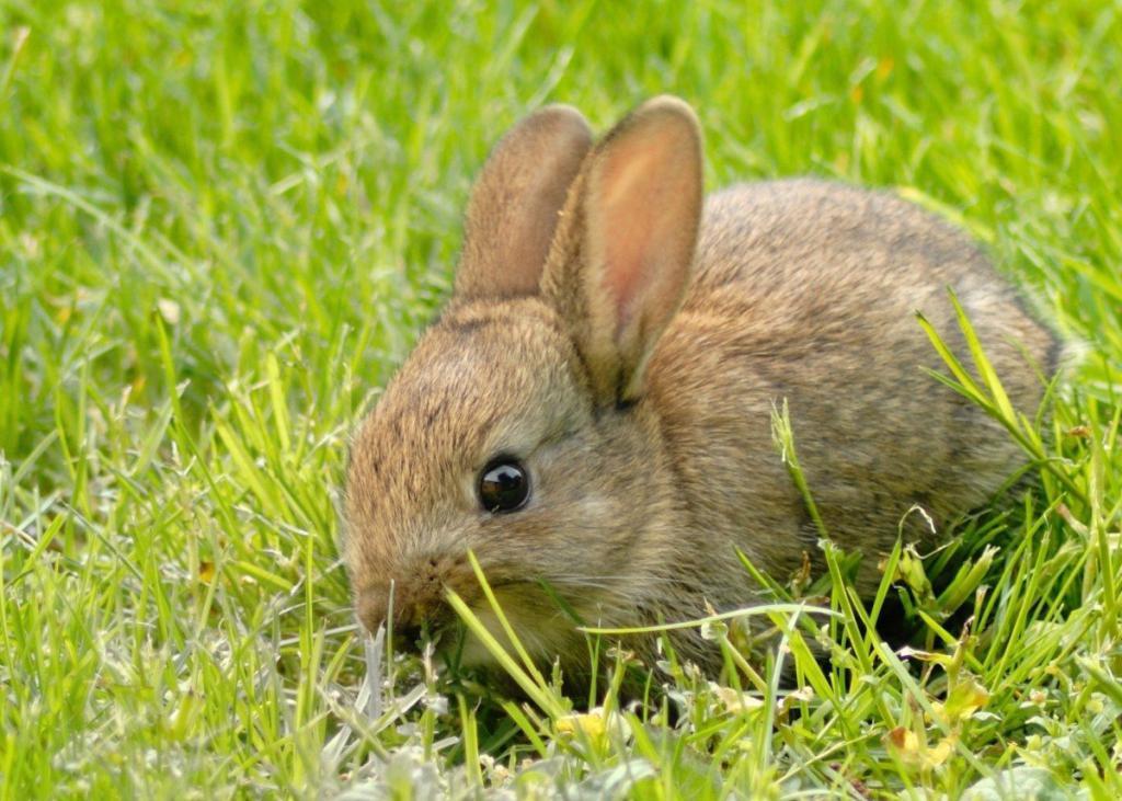 маленький напуганный кролик