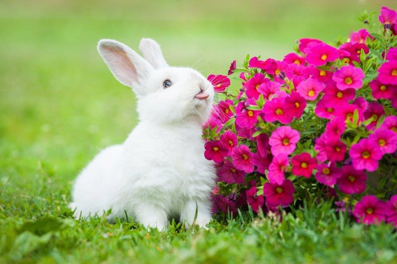 кролик возле цветов