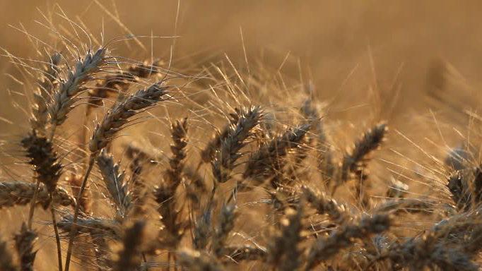 Кормление животных зерновыми