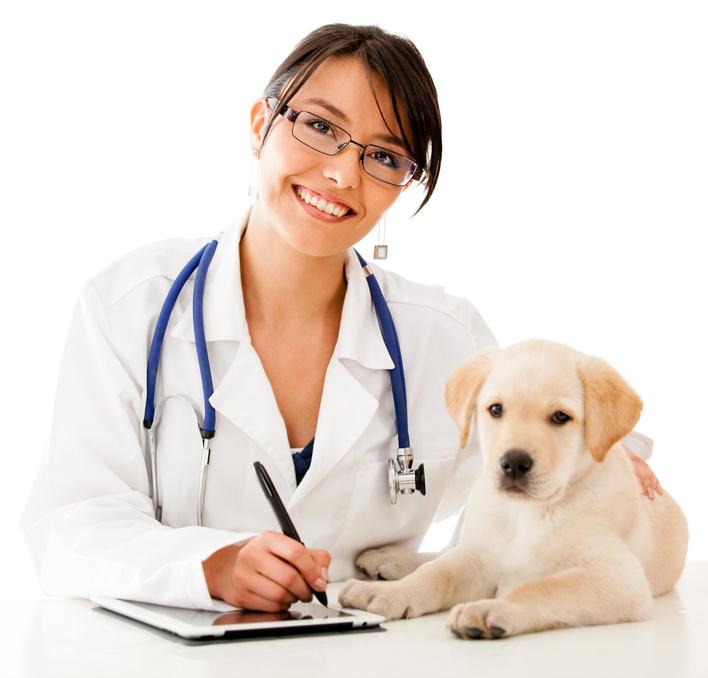 ветеринарная клиника самара круглосуточно промышленный район