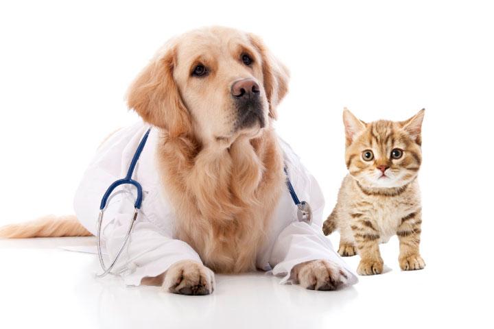 круглосуточная ветеринарная клиника самара кировский район