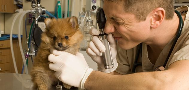 ветеринарный врач