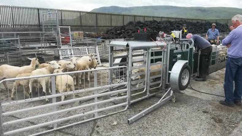 Взвешивание баранов