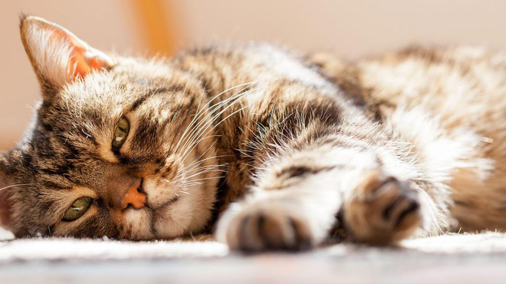 Скучающая кошка