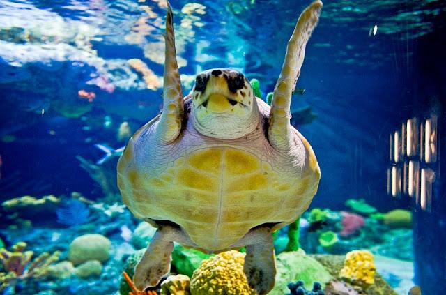 Обитатели аквариумов