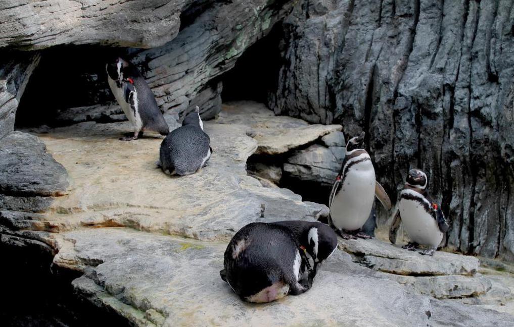 Павильон с пингвинами