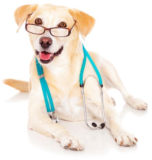 ветеринарный доктор