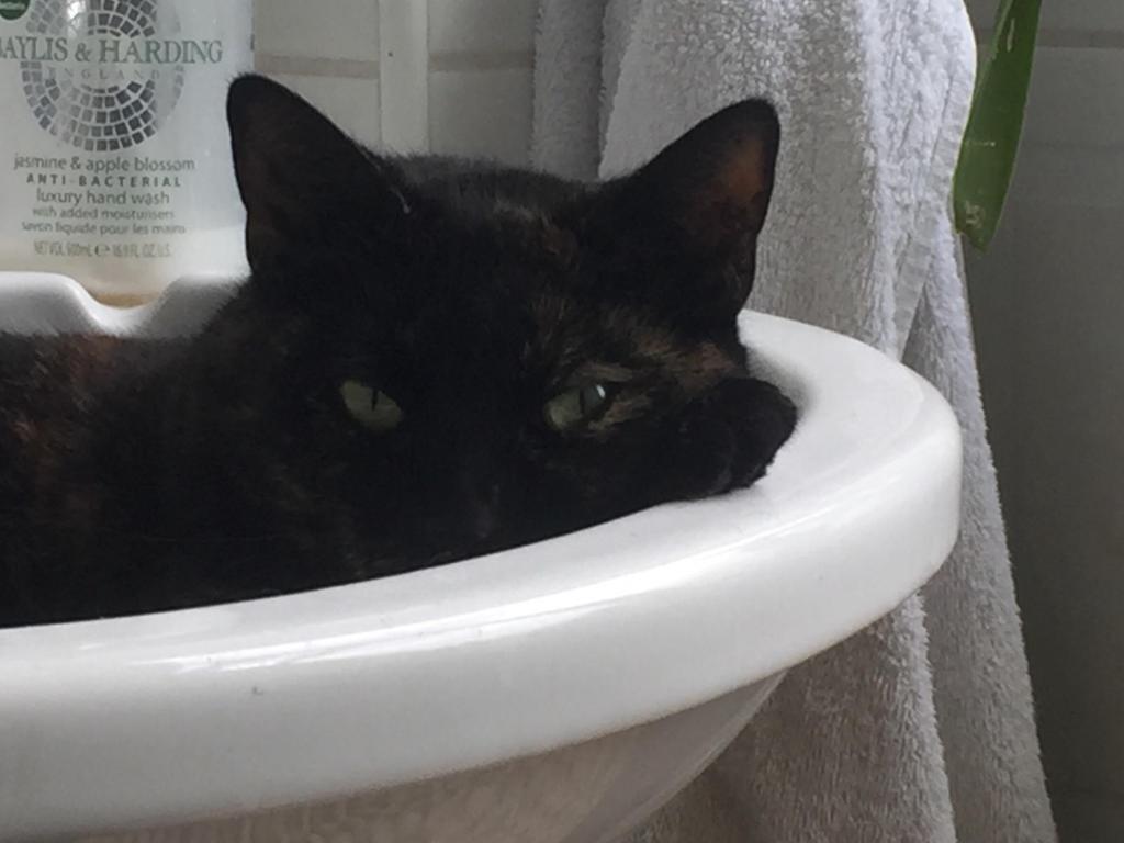 кот любит оливки можно ли давать