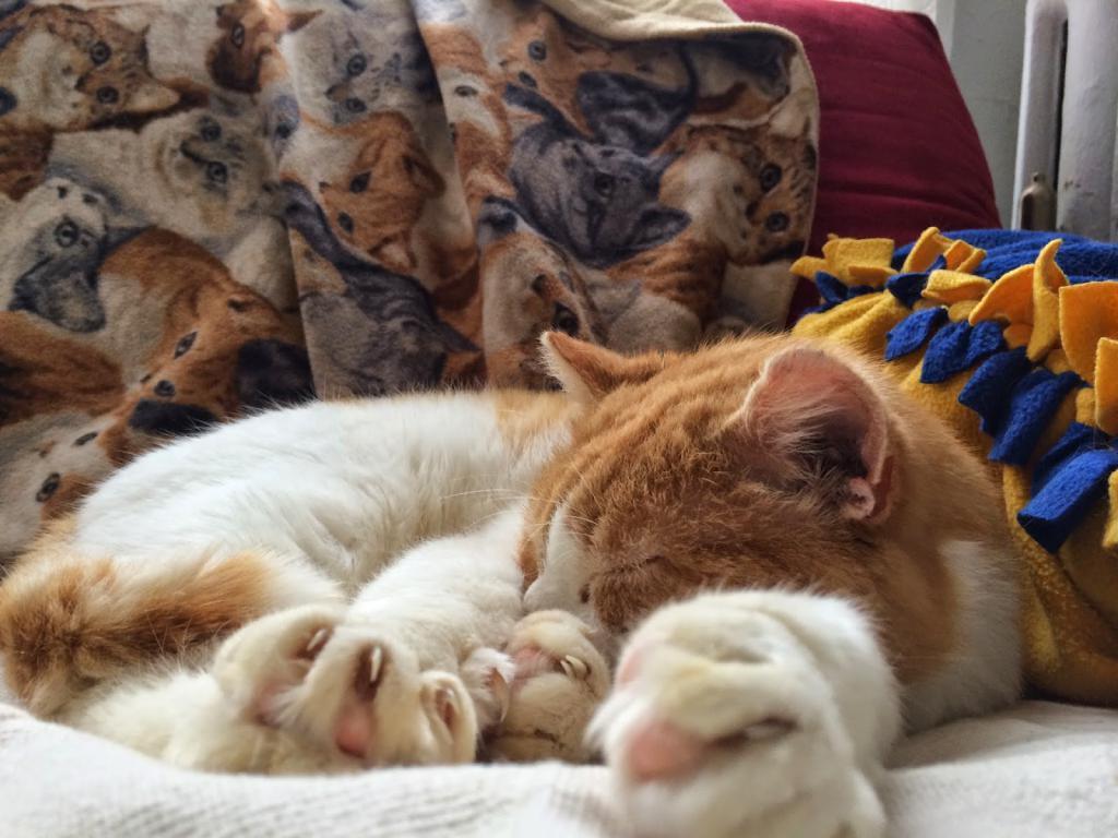 кошки и оливки