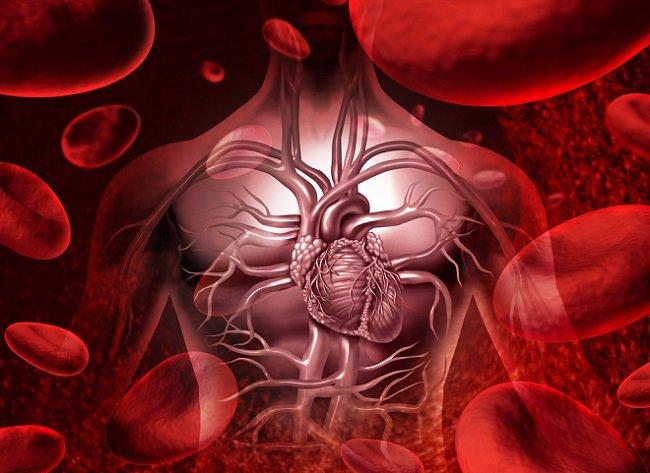 Механизм регуляции кровообращения