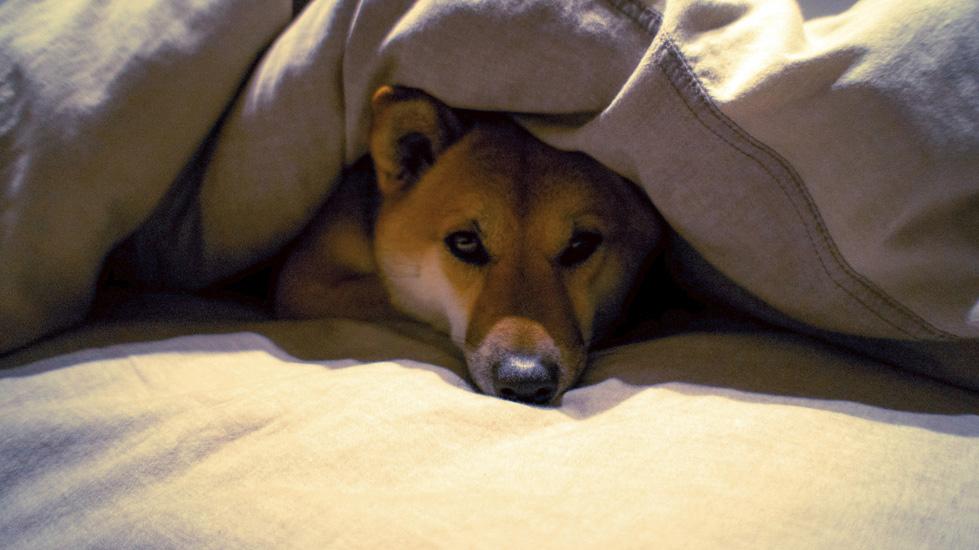 Проблемы со здоровьем у пса