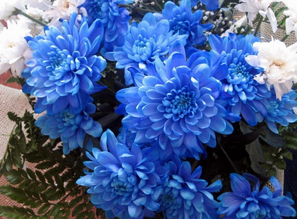 букет из голубых хризантем