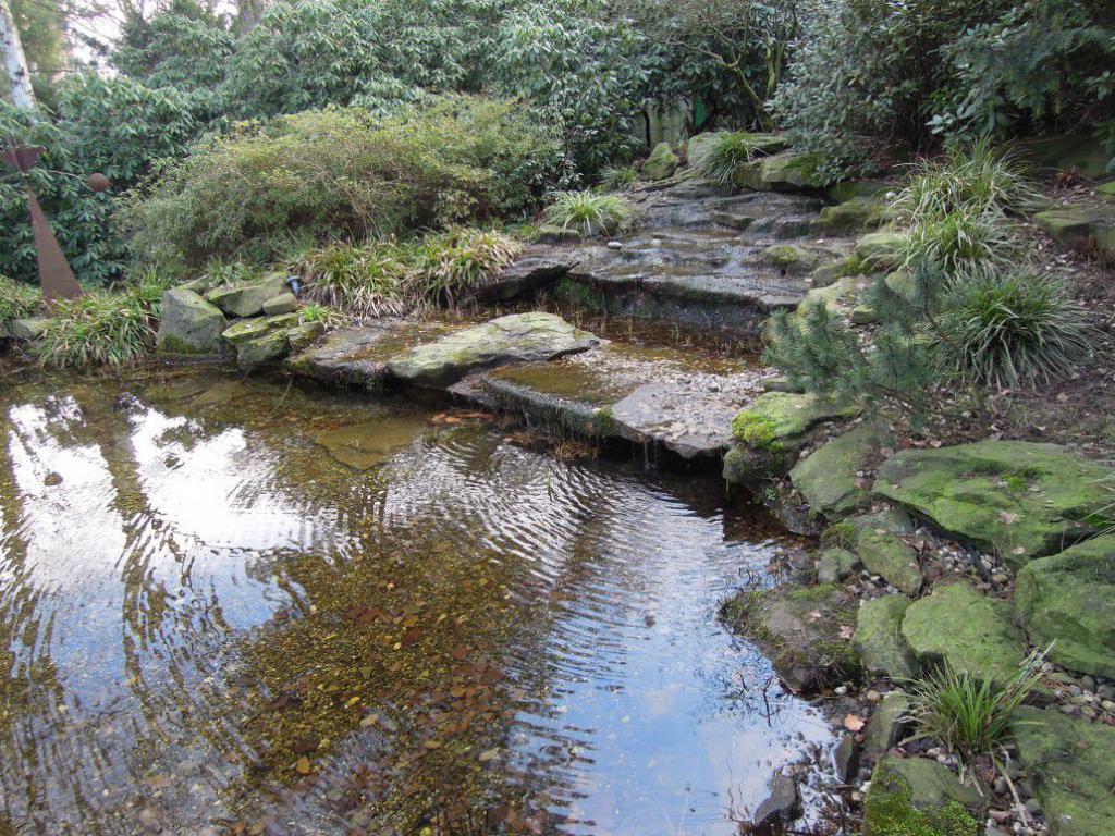 Биологический пруд