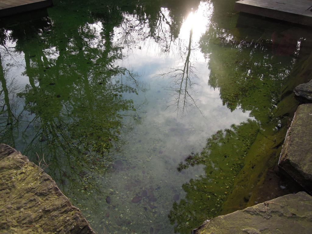 Искусственно созданный очистной водоем