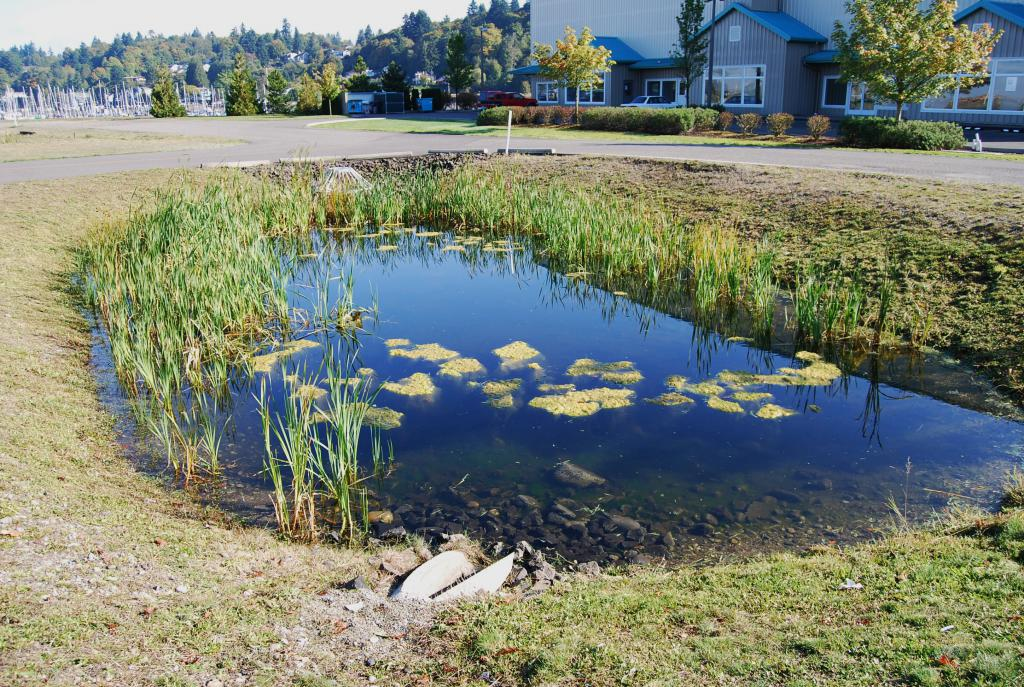 Чистая вода в пруду