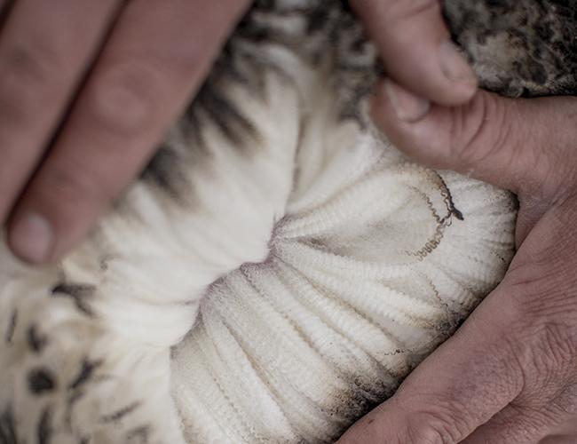 ковровый ворс