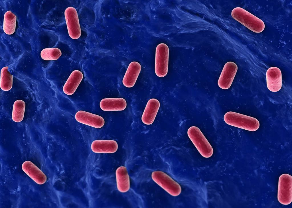 понос у ребенка после антибиотиков лечение