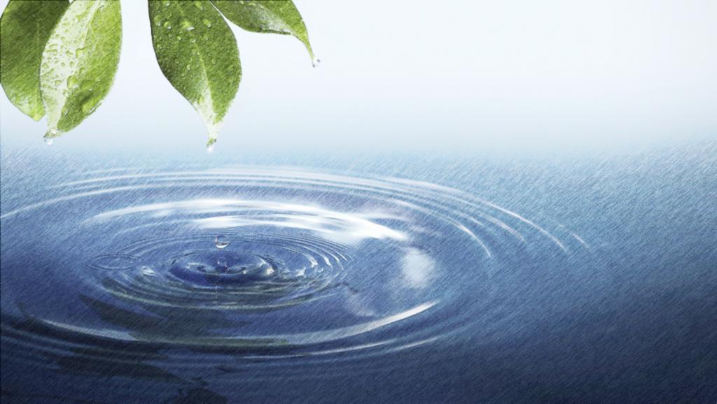 листья и вода