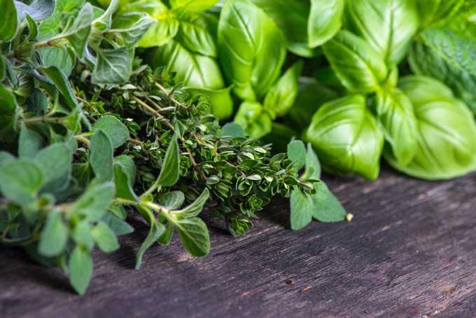 Вкусная, свежая, средиземноморская зелень