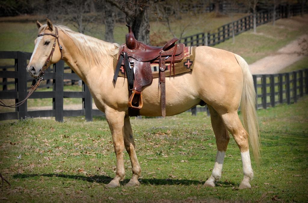 Мерин конь это