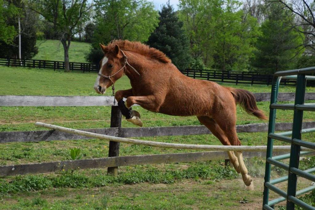 Мерин конь без яиц