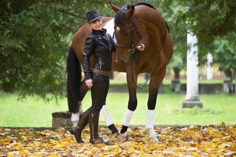 Мерин конь фото