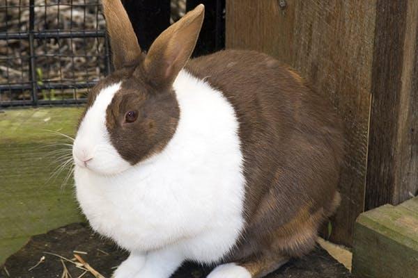 Почему чихают кролики