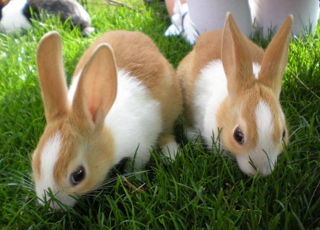 Почему кролик часто чихает
