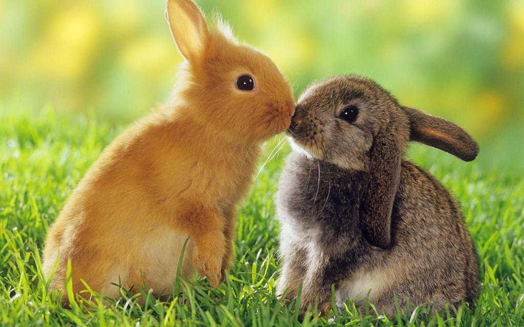 Кролики чихают чем лечить