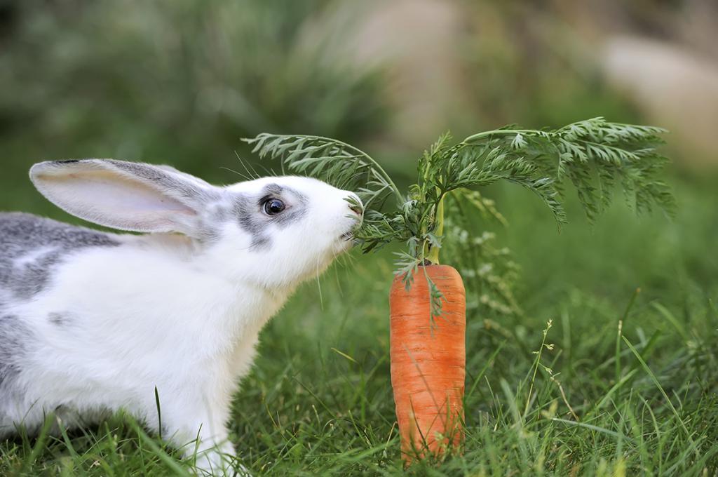 У кролика сопли и чихает