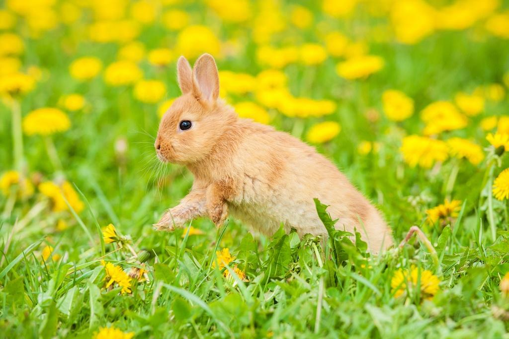 Здоровый кролик