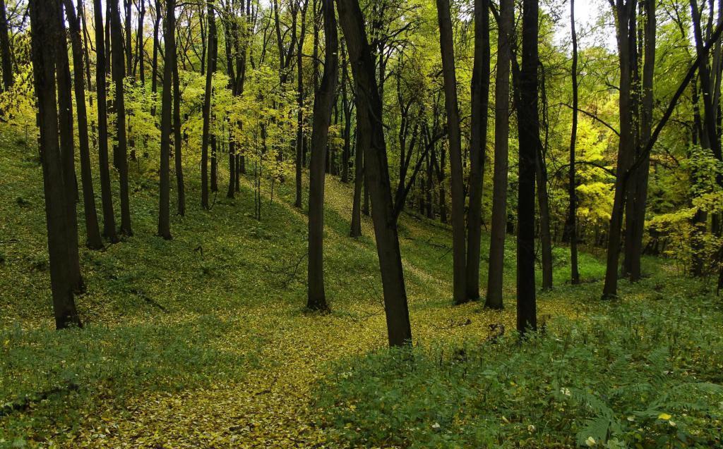 Суворовский парк осенью