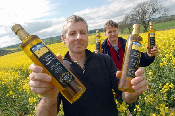 Выращивание на маслосемена