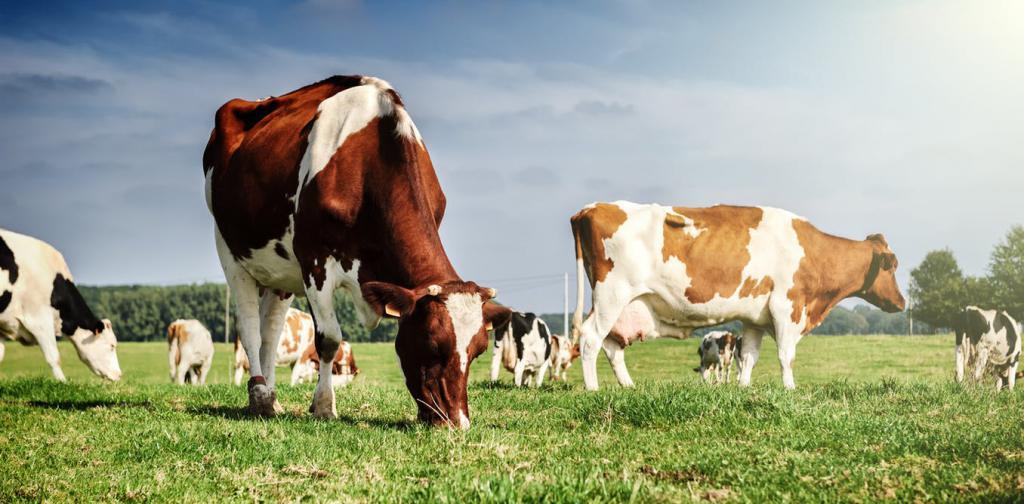 Качество корма для животных