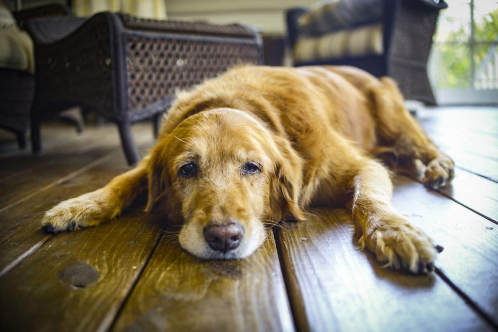 симптомы токсокароза у собак
