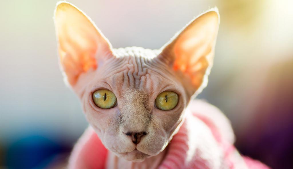 Красавец кот