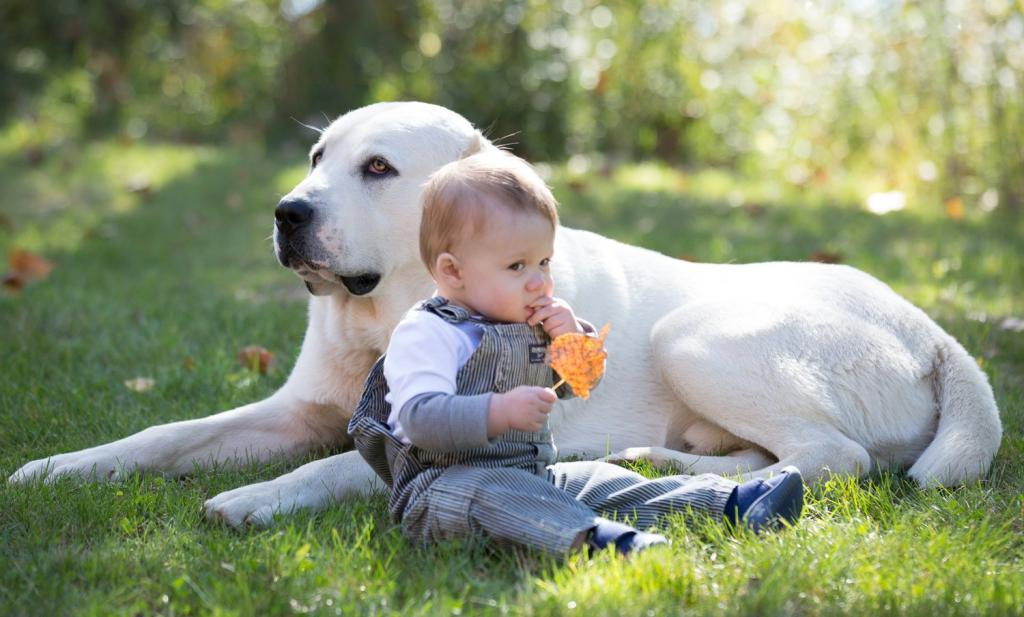 дети называют собаку