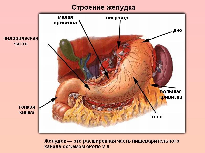 тяжесть в верхней части желудка