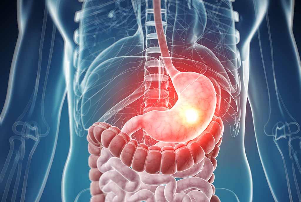 кардиальная часть желудка