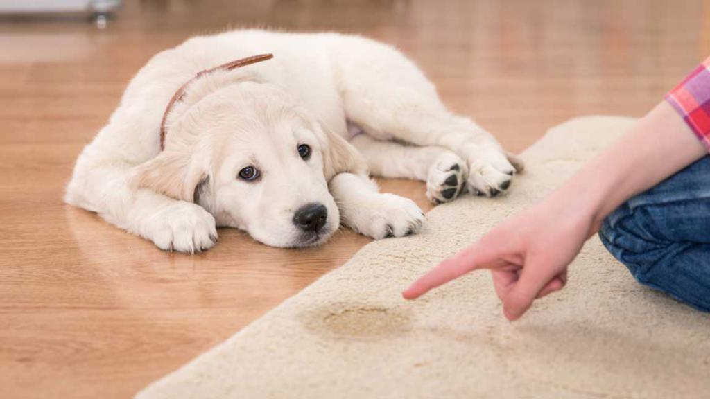 Признаки мочекаменной болезни у собак