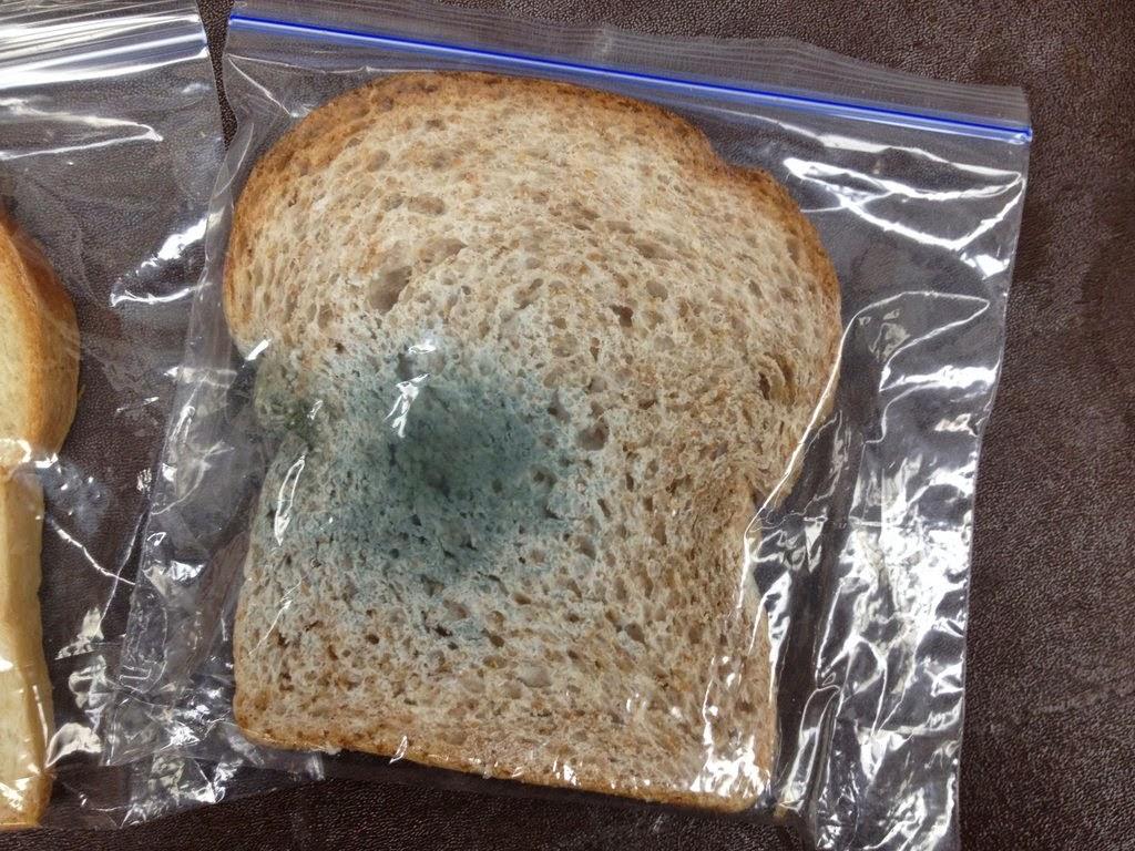 эксперимент с хлебом