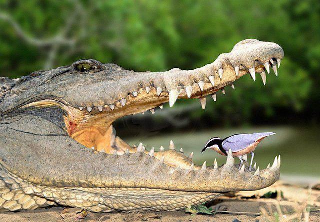 Корреляция в животном мире