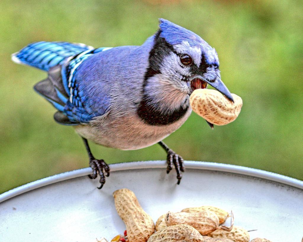 крепкий клюв с орешком