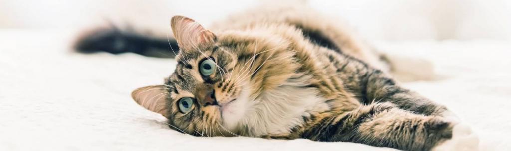 кастрация кота в 5 лет показания