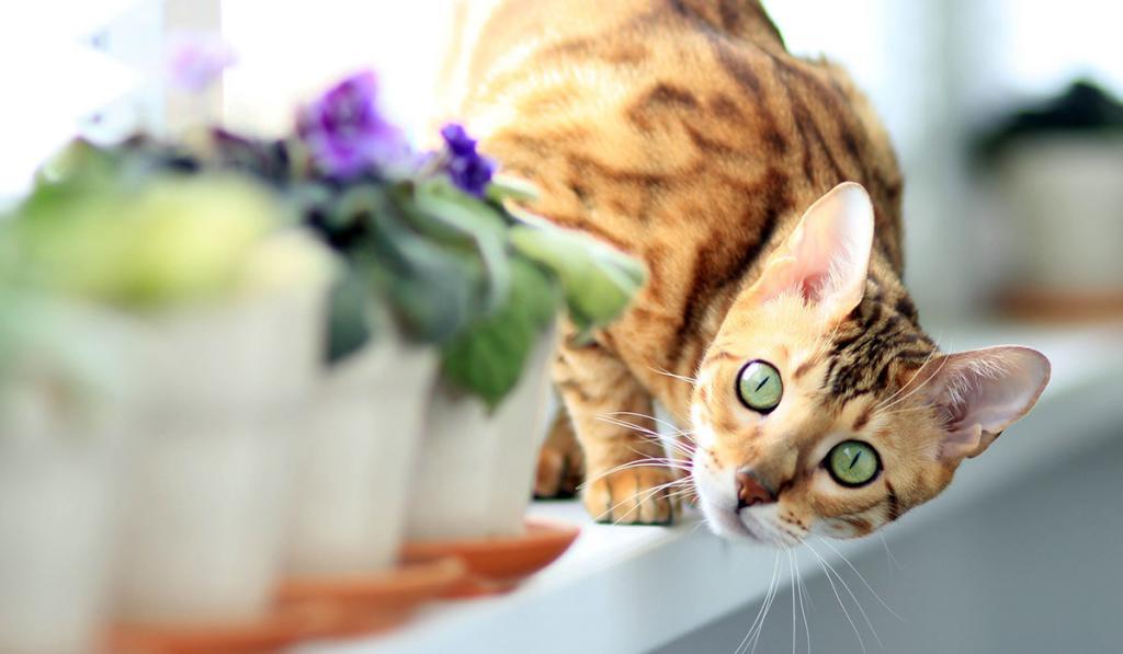 стоит ли кастрировать 5 летнего кота